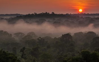 Visit Ford's Rubber Plantations in the Heart of the Amazon