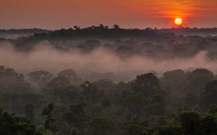Ford's Rubber Plantations in the Amazon