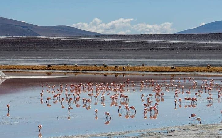 Overland trip in Bolivia: driving the Laguna's