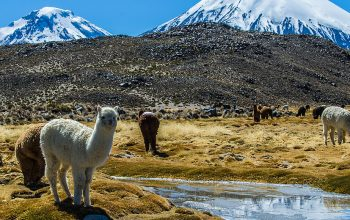 Chile's Northernmost Desert