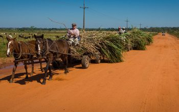 A Glance into the Lives of the Mennonites in Paraguay