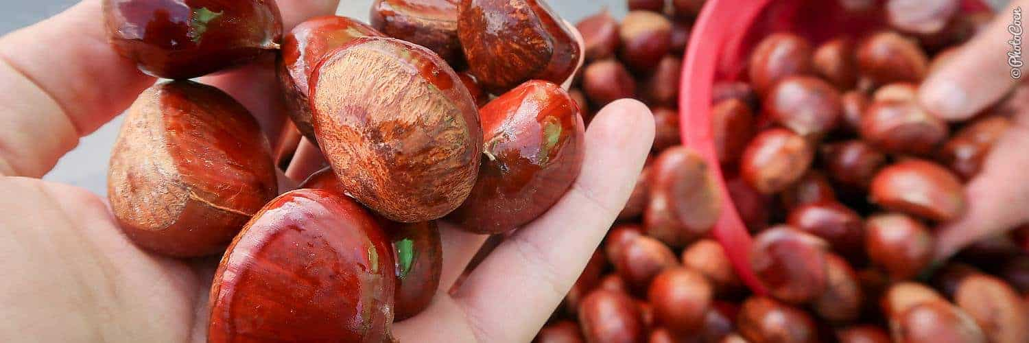 overland foods - chestnuts in the pressure cooker